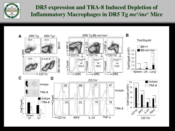 DR5 expression and TRA-8 Induced Depletion of Inflammatory Macrophages in DR5 Tg