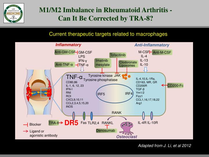 M1/M2 Imbalance in Rheumatoid Arthritis - Can It Be Corrected by TRA-8?