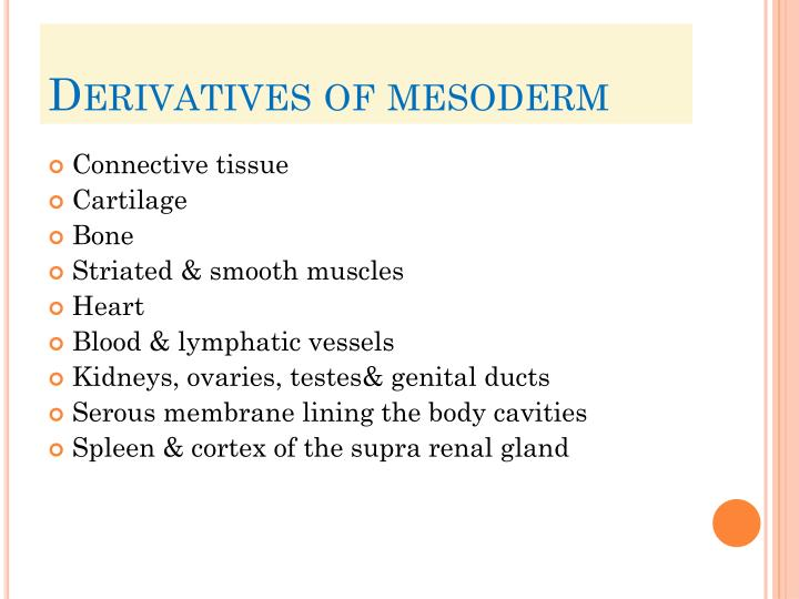 Derivatives of mesoderm