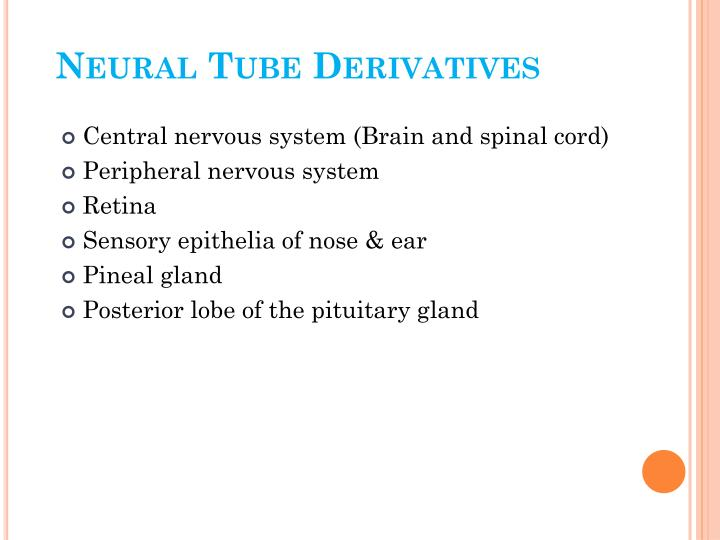 Neural Tube Derivatives