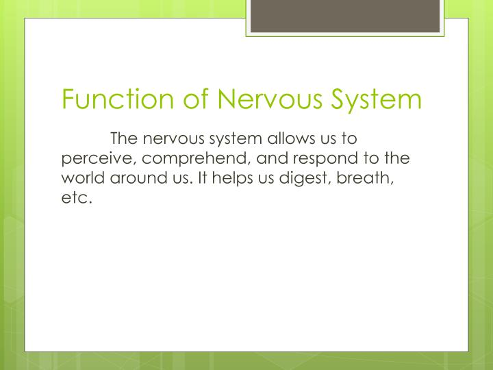 Function of Nervous System
