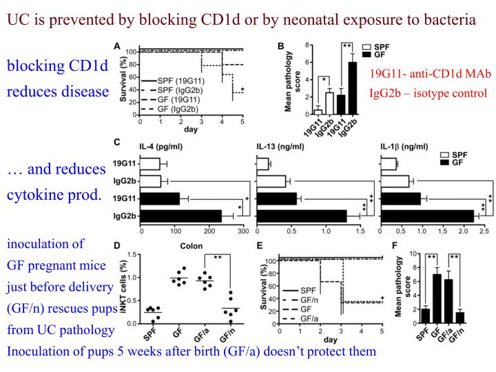 UC is prevented by blocking CD1d or by neonatal exposure to bacteria