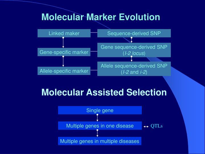 Molecular Marker Evolution