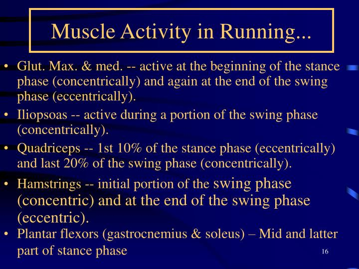 Muscle Activity in Running...