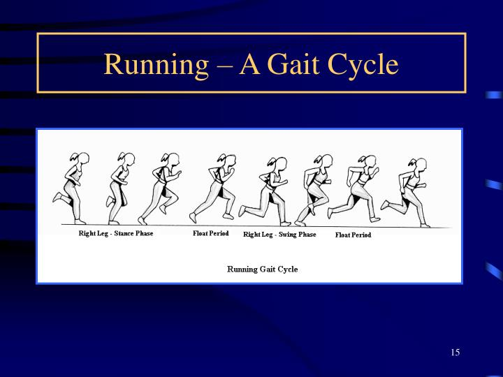Running – A Gait Cycle