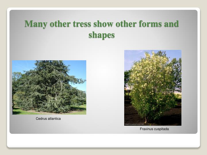 Many other tress show other forms and shapes