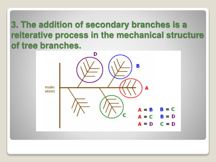 3. The addition of secondary branches is a reiterative process in the mechanical structure of tree branches.