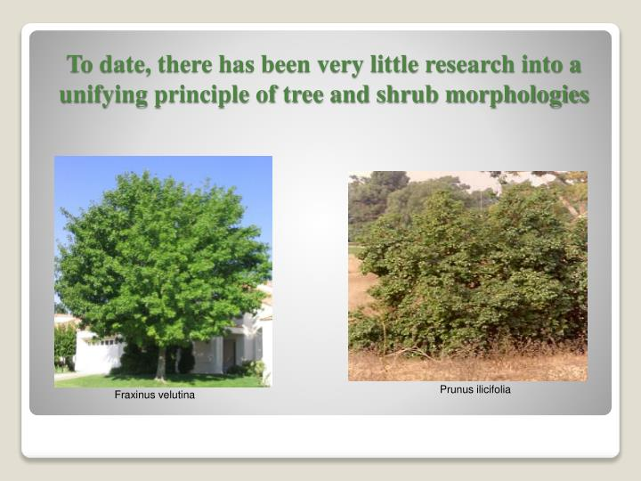 To date, there has been very little research into a unifying principle of tree and shrub morphologies