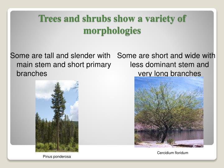 Trees and shrubs show a variety of morphologies