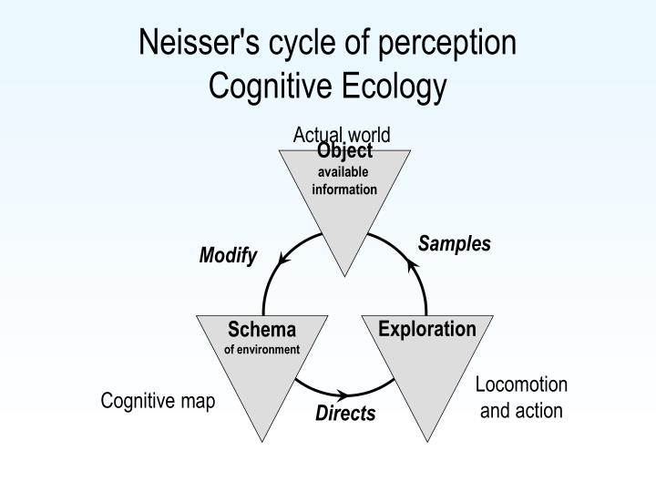 Neisser's cycle of perception