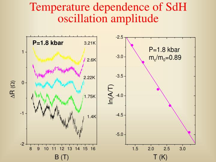 Temperature dependence of SdH oscillation amplitude