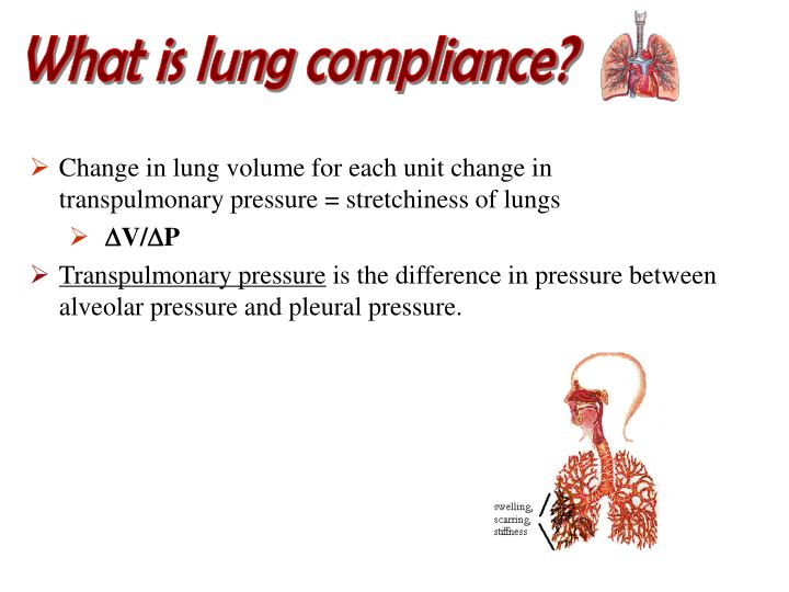 What is lung compliance?