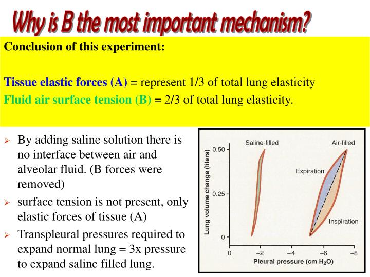 Why is B the most important mechanism?