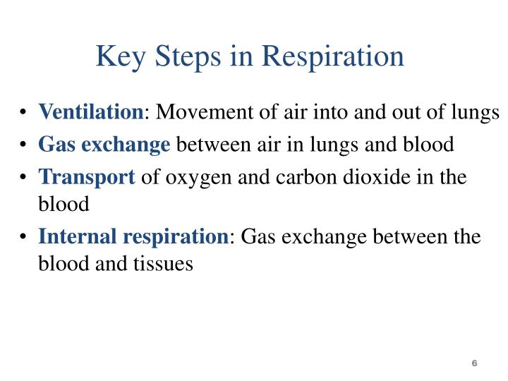 Key Steps in Respiration