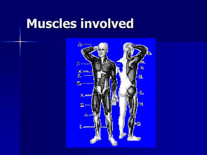 Muscles involved