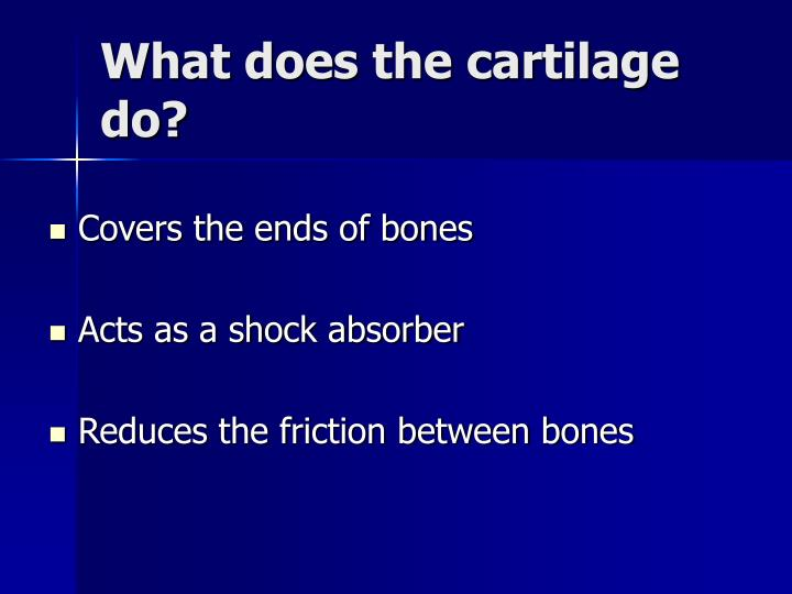What does the cartilage do?