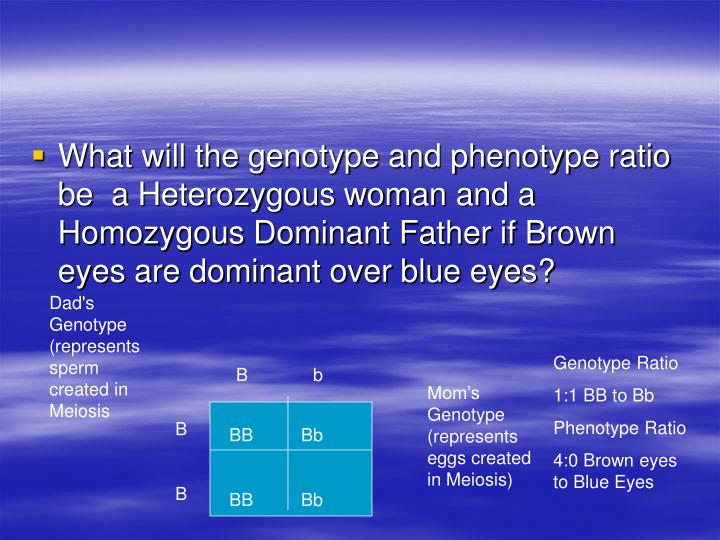 What will the genotype and phenotype ratio be  a Heterozygous woman and a Homozygous Dominant Father if Brown eyes are dominant over blue eyes?