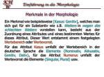 merkmale in der morphologie1