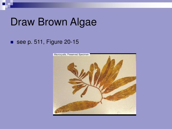 Draw Brown Algae