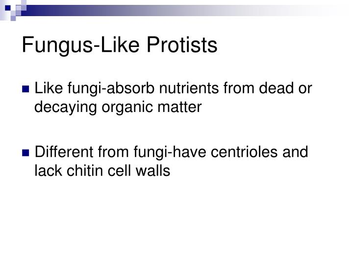 Fungus-Like Protists