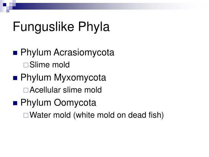 Funguslike Phyla