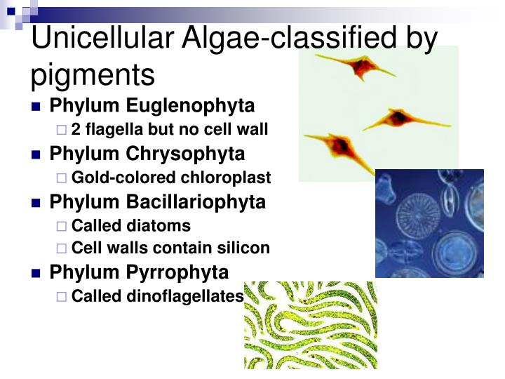 Unicellular Algae-classified by pigments