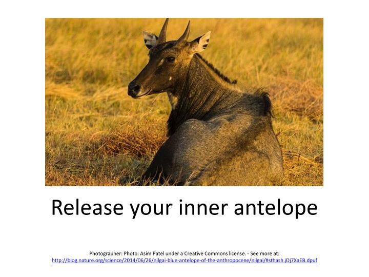 Release your inner antelope