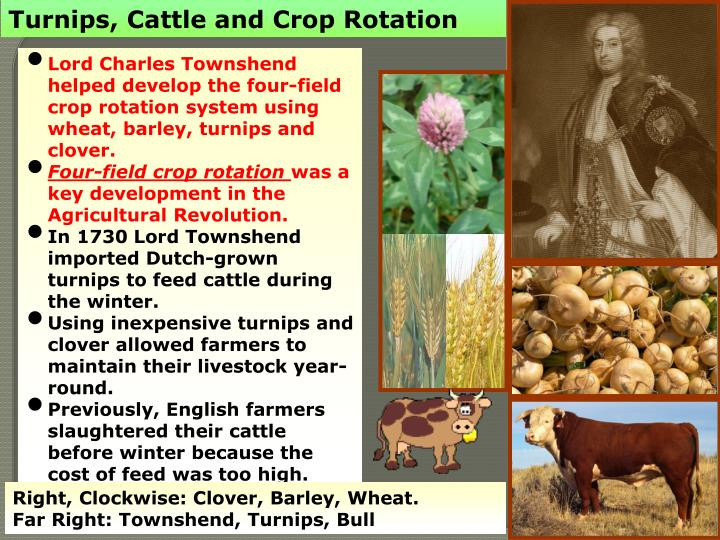 Turnips, Cattle and Crop Rotation