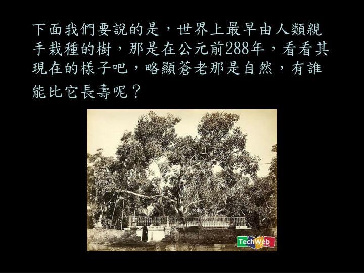 下面我們要說的是,世界上最早由人類親手栽種的樹,那是在公元前