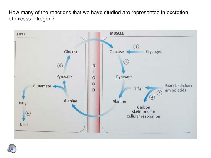 How many of the reactions that we have studied are represented in excretion