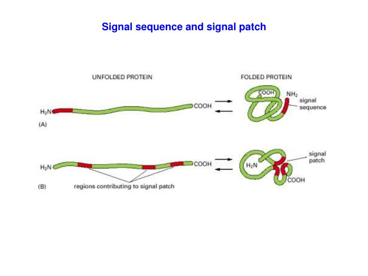 Signal sequence and signal patch
