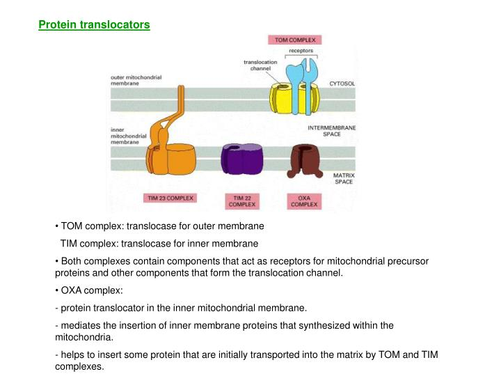 Protein translocators