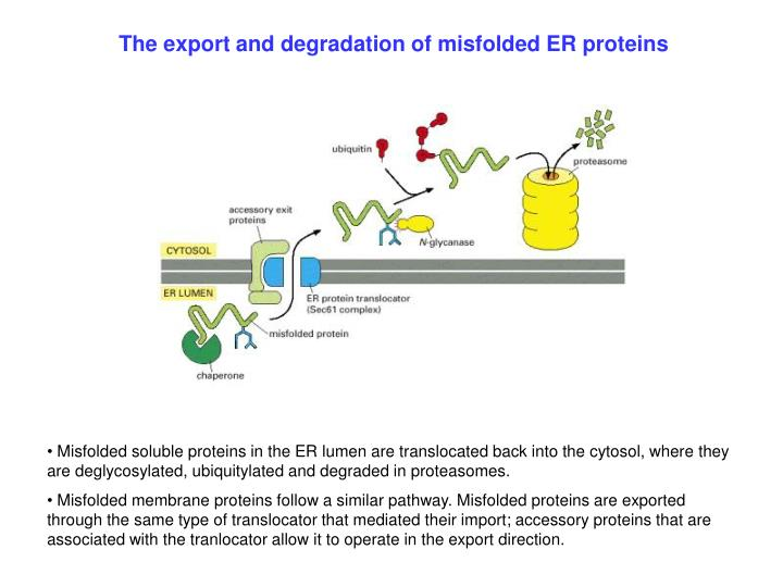The export and degradation of misfolded ER proteins