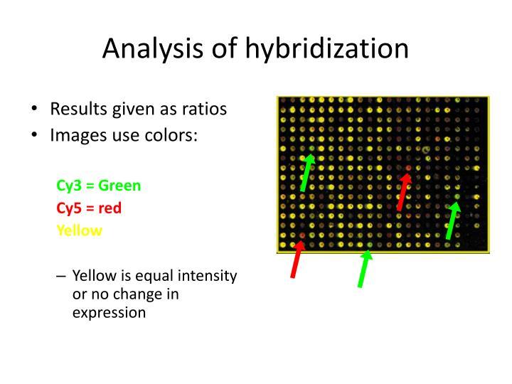 Analysis of hybridization