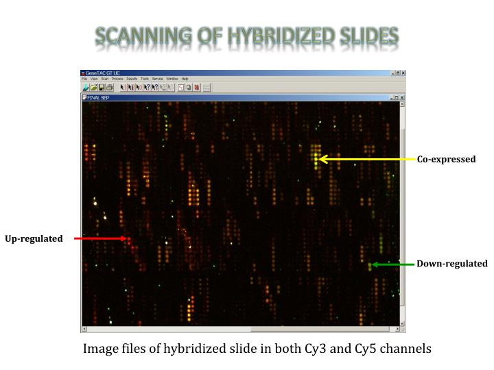 Scanning of Hybridized Slides