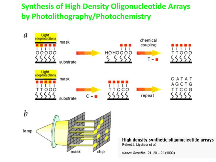 Synthesis of High Density Oligonucleotide Arrays by Photolithography/Photochemistry