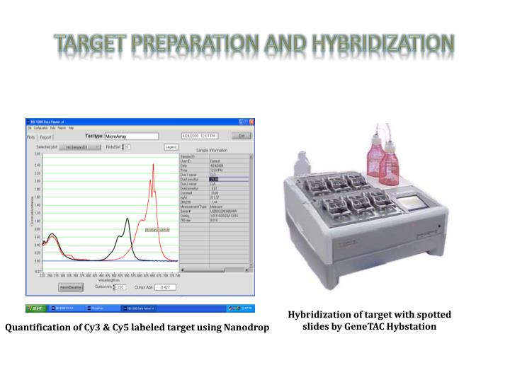Target Preparation and Hybridization