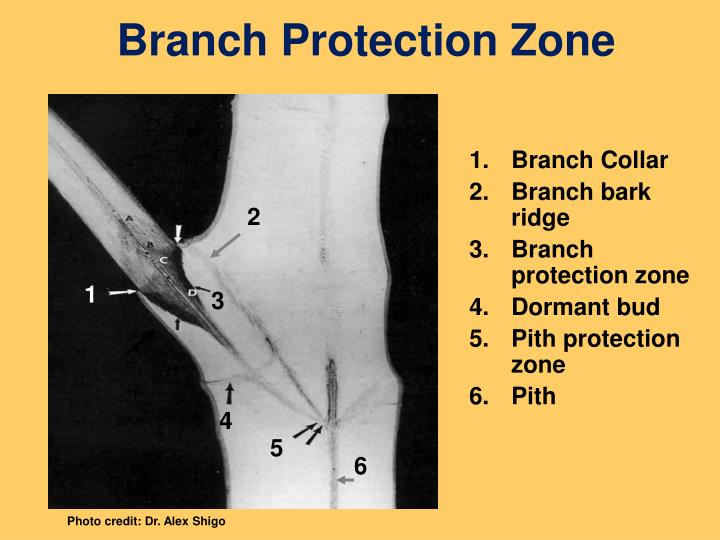Branch Protection Zone