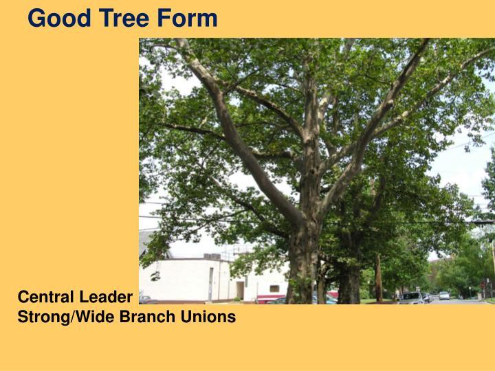 Good Tree Form