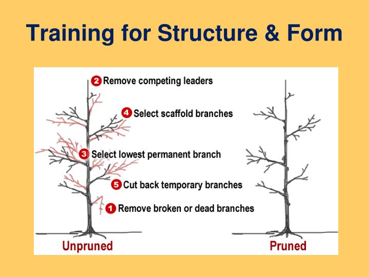 Training for Structure & Form