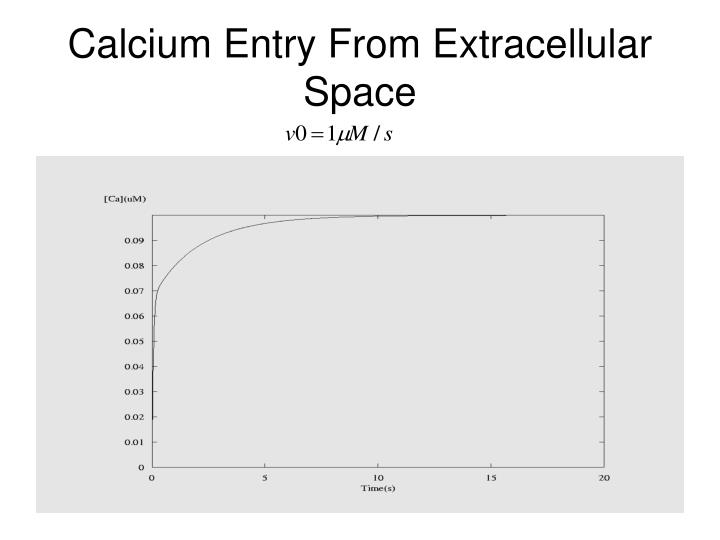 Calcium Entry From Extracellular Space
