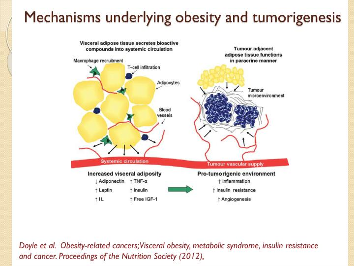 Mechanisms underlying obesity and