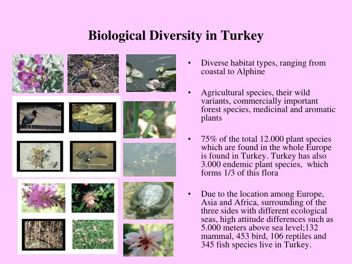 Biological diversity in turkey