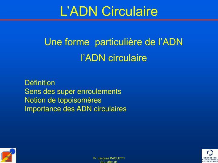 L'ADN Circulaire