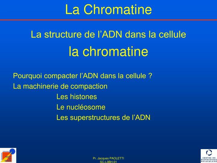 La structure de l'ADN dans la cellule