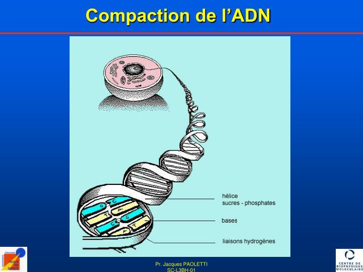 Compaction de l'ADN
