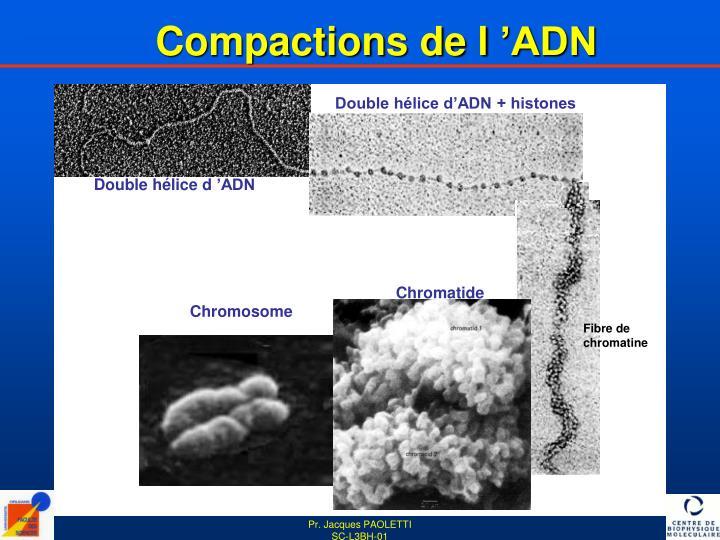 Compactions de l'ADN