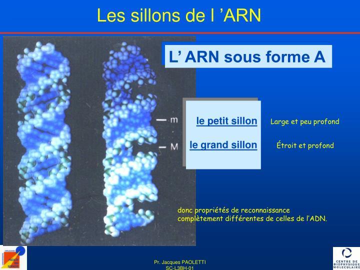 Les sillons de l'ARN