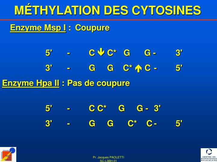 MÉTHYLATION DES CYTOSINES