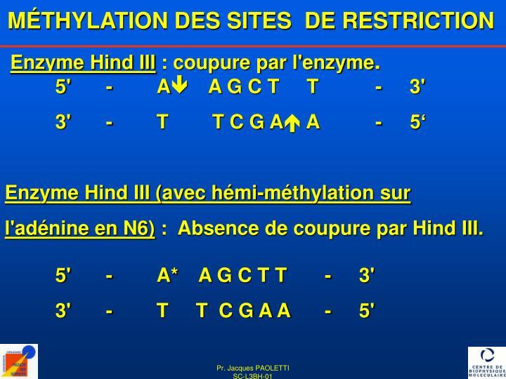 MÉTHYLATION DES SITES  DE RESTRICTION